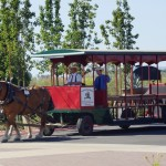 The horse drawn trolley arrived.